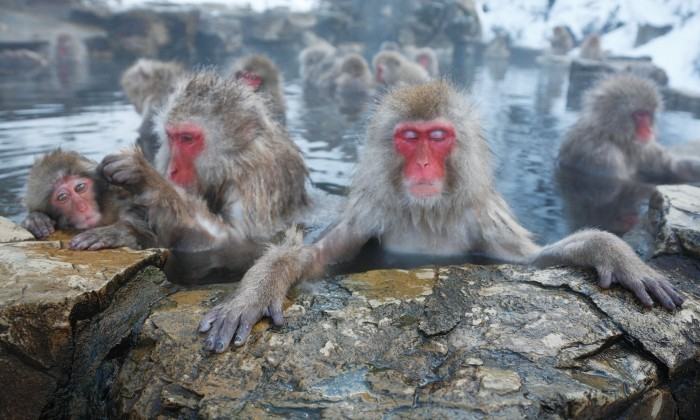 Day Trip to see Monkey Bath in Hotspring